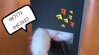 책꽂이에 들어간 먼치킨 아기 고양이 #구름티비 #9ro…