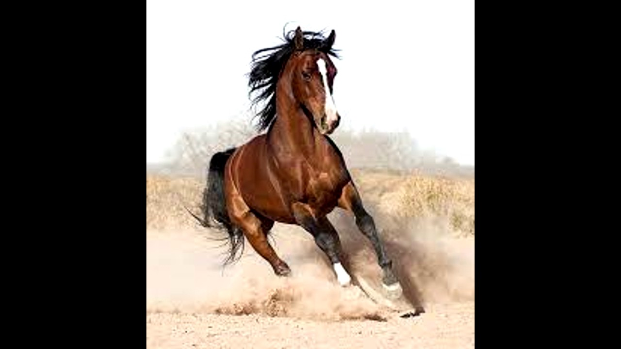 말 들판에서 달리는 소리, Running Horse In Field Sound Effect / Free ... - photo#14