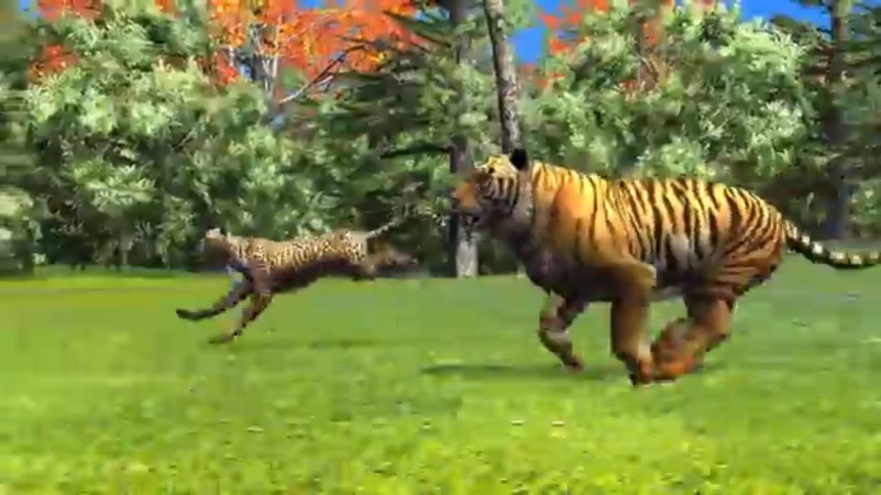 Animal Race Cheetah Vs Tiger Running Race For Kids Who Will Win Youtube