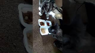 Louise's crazy animal videos