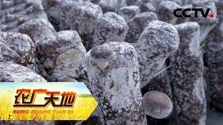 《农广天地》 20190603 菌棒污染从根儿治  CCTV农业