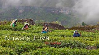 Sri Lanka. Tea plantations of Nuwara Eliya/ Шри Ланка. Как собирают цейлонский чай