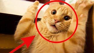 Video Funny Cats Compilation [Most See] Funny Cat Videos Ever Part 3 download MP3, 3GP, MP4, WEBM, AVI, FLV April 2018