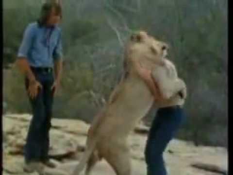 Cảm động về tình cảm của chú sư tử Christian