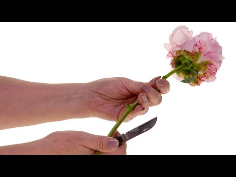 Correct Floral Knife Technique