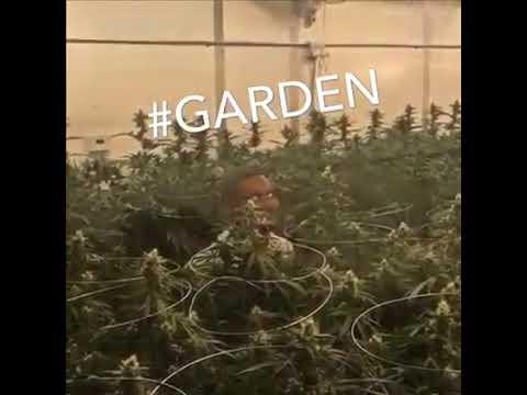 Tshego Garden Music Video Track