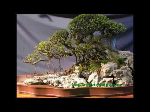 caycanhvietnam-tieu canh bonsai dac sac-video clip-boi thanhvan62.flv