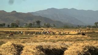 Field on the way to Sadu Chiru waterfall, Leimaram - Manipur