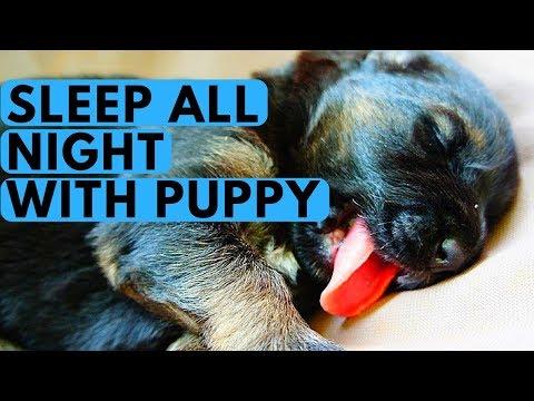 Teach Your Puppy to Sleep Through the Night