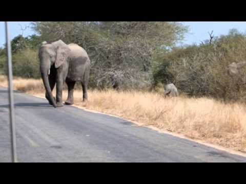 Elephants Crossing The Road In The Kruger National Park