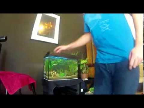 aquascaping 30 litre fish tank youtube. Black Bedroom Furniture Sets. Home Design Ideas