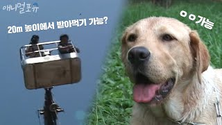 20m 수직하강 먹이를 받아먹는 생활의 달견 a dog…