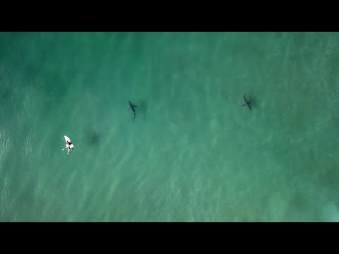3-minutes of Sharks Circling Surfers in Durban, South Africa | SURFER Magazine