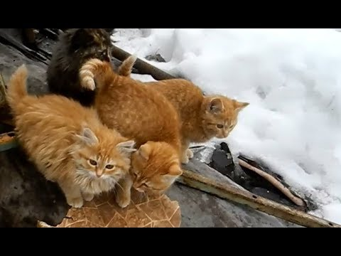 Кому нужны рыжие котята?