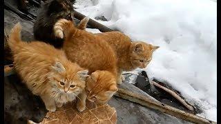 Эти рыжие котята...неспроста здесь!!!
