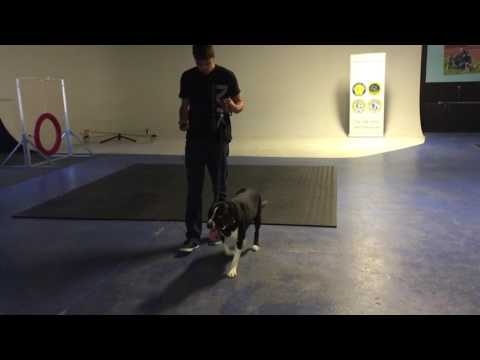 Scherzer Testimonial for Michigan Dog Training