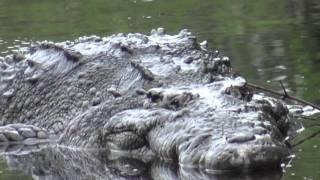 Oko w oko z krokodylem ;)
