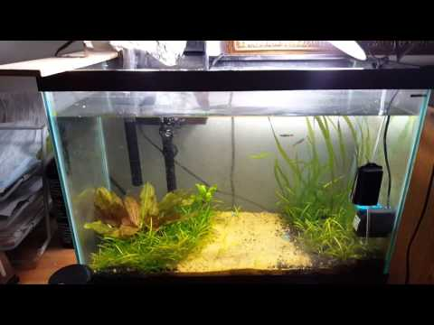 How To Get Rid Pest Snails BEST METHOD!