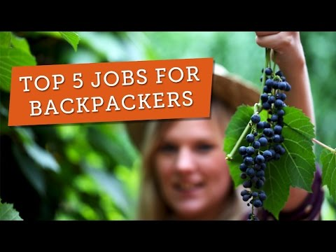Top 5 Jobs for Backpackers on a Working Holiday in Australia