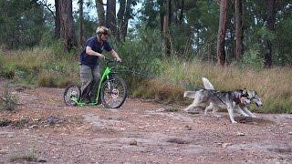 Repeat youtube video Dog scooter Kostka Mushing Pro & extreme Australian terrain