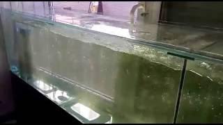 Аквариум для продажи живой рыбы(, 2016-06-24T10:47:31.000Z)