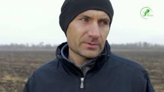 Відгук   Соняшник та озима пшениця   Запорізька обл  2015