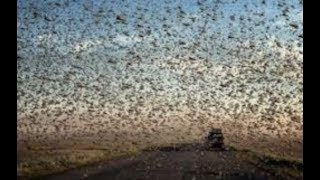 "Prophecy Alert: ""Apocalyptic Hail, Locust In Egypt, 3rd Temple"" End Of The World"