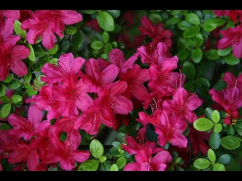 Most Beautiful Variety Flowers Youtube