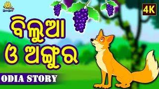 ବିଲୁଆ ଓ ଅଙ୍ଗୁର - The Fox and The Grapes in Odia | Odia Story | Fairy Tales in Odia | Koo Koo TV
