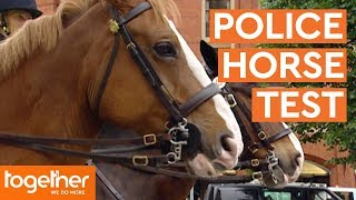 Police Horse Undertakes His Final Test | Mounted Branch