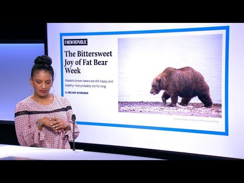 Will Alaska's Fat Bear Week survive climate change?