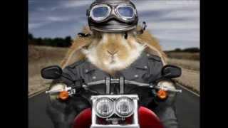 Śmieszne Zwierzęta (króliki)
