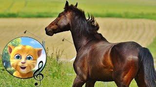 Споем вместе. Лошадка (Ускакала в поле молодая лошадь) от котенка Джинжера.