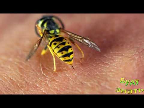 Вопрос: Оранжевые осы, чем они опасны?