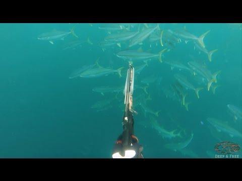 Chasse sous-marine - Amérique du sud - Chili 2017