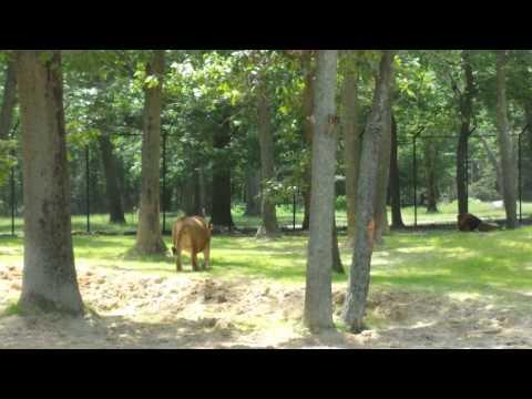 Six Flags Safari Off Road Adventure - (Part 6)