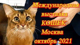 Москва. Октябрь 2021. ВДНХ. Выставка кошек. Знакомлюсь с новыми для меня породами.