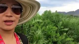 Taking you behind the scenes at the Young Living farms in Mona, UT. Explore the plants growing here!