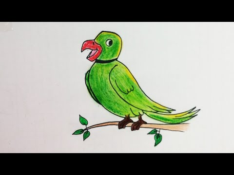 How To Draw Smiling Parrot Simple Nature Drawing Very