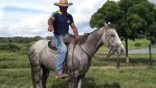 No pés seus arco de cavalos que o charlie causa