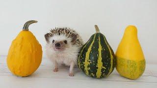 СМЕШНЫЕ ЖИВОТНЫЕ 2020 . (СМЕШНОЕ ВИДЕО) Hamsters like #332 funny video about animals