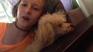 Я в шоке ,но моя собака тоже умеет петь !!!!! ШООООК(, 2016-05-10T10:57:45.000Z)