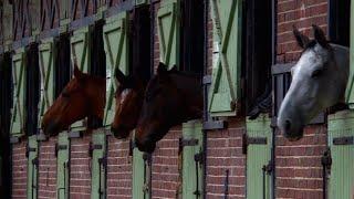 Haras de Jardy : le plus grand centre équestre français thumbnail