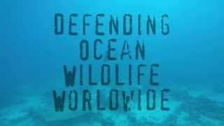 Sea Shepherd | Defending Ocean Wildlife Worldwide