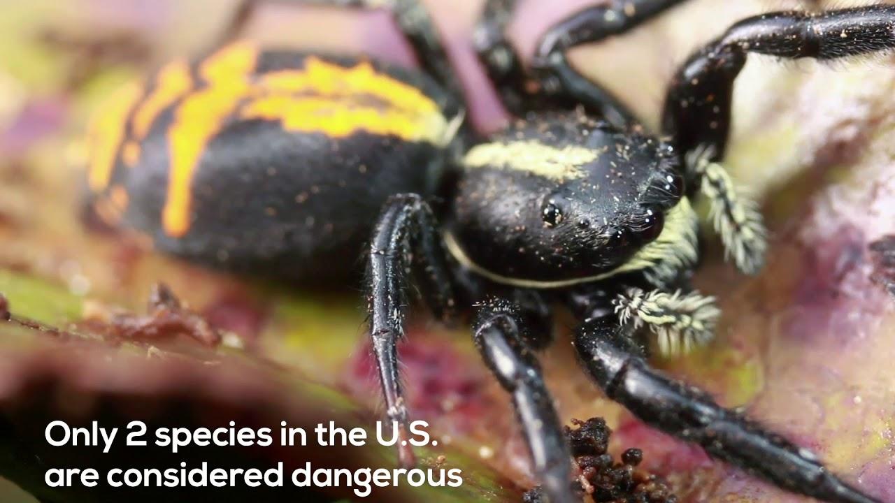 HomeTeam Talks Bug Basics: Spiders