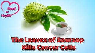 The Leaves of Soursop Kills Cancer Cells - Food for Health