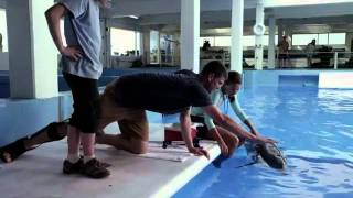 Dolphin Tale Official Movie Trailer HD - Dec 20th Release