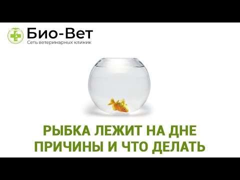 Золотая рыбка болеет лежит на дне
