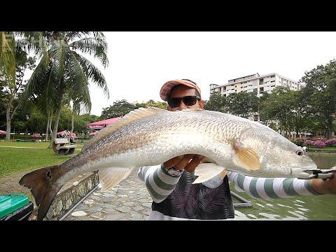 FishingKaki.com - Lunkerhunt Soft Plastic Lures