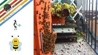 10 of 10 - Apicoltura - Api e inquinamento: apicoltori in città e arnie sui balconi (ape  vs vespa)